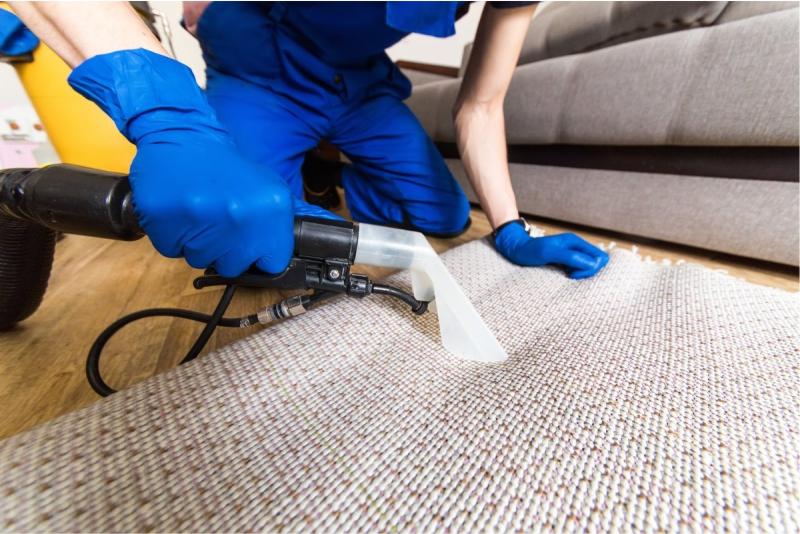 clean carpet mold